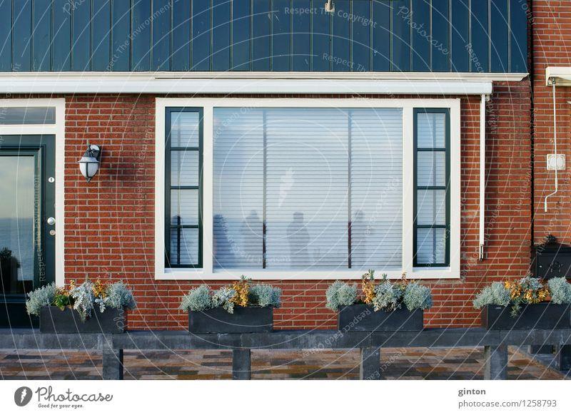Reihenhaus schön Häusliches Leben Haus Dekoration & Verzierung Moos Farn Grünpflanze Einfamilienhaus Mauer Wand Fassade Fenster Tür Nostalgie Wohnhaus