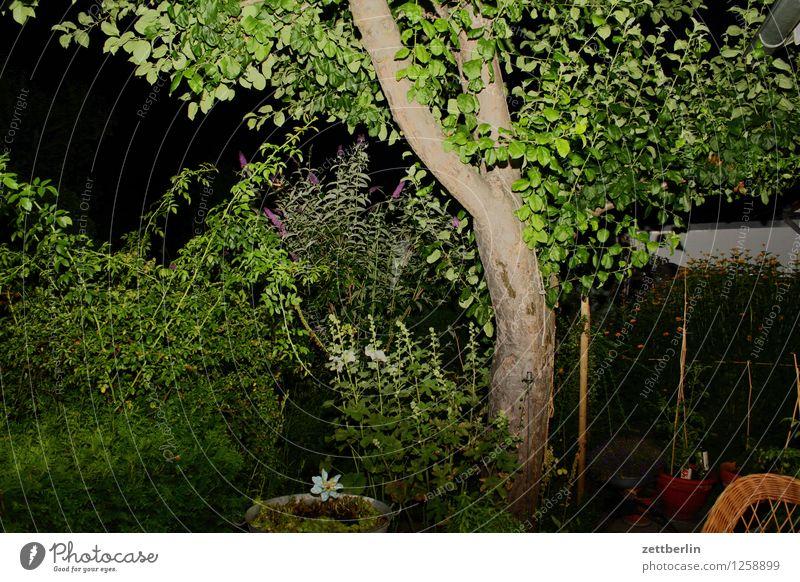 Angeblitzter Apfelbaum Baum Baumstamm Ast Zweig Blatt Garten Schrebergarten Abend Nacht Blitzlichtaufnahme Terrasse Hecke Menschenleer Textfreiraum Sommer