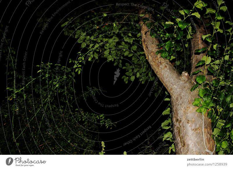 Angeblitzter Apfelbaum again Baum Baumstamm Ast Zweig Blatt Garten Schrebergarten Abend Nacht Blitzlichtaufnahme Terrasse Hecke Menschenleer Textfreiraum Sommer