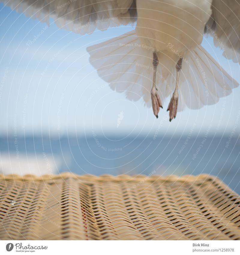 Senkrechtstarter Umwelt Natur Himmel Tier Vogel Flügel 1 fliegen Ferien & Urlaub & Reisen ästhetisch elegant frei hoch maritim natürlich blau braun grau