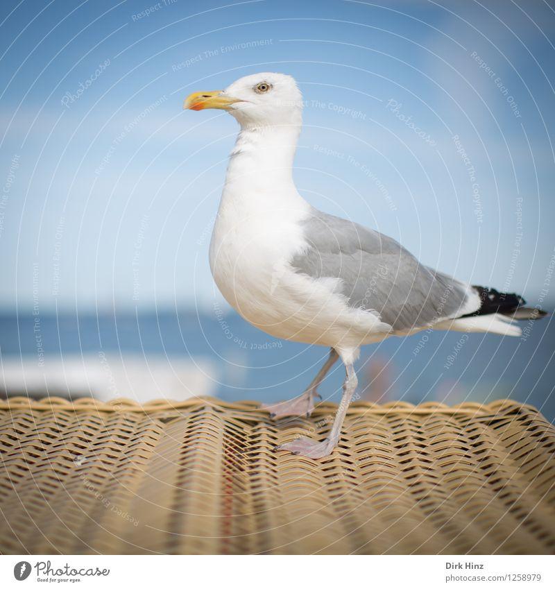 Kurz vor dem Abflug Natur Ferien & Urlaub & Reisen blau weiß Tier Strand Reisefotografie Umwelt Küste Freiheit braun Vogel Tourismus beobachten Ostsee nah