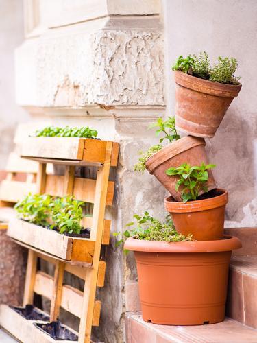 Pflanze grün Blume Umwelt Frühling Gras klein Garten Zufriedenheit Freizeit & Hobby Dekoration & Verzierung Wachstum ästhetisch Kreativität Beton einfach