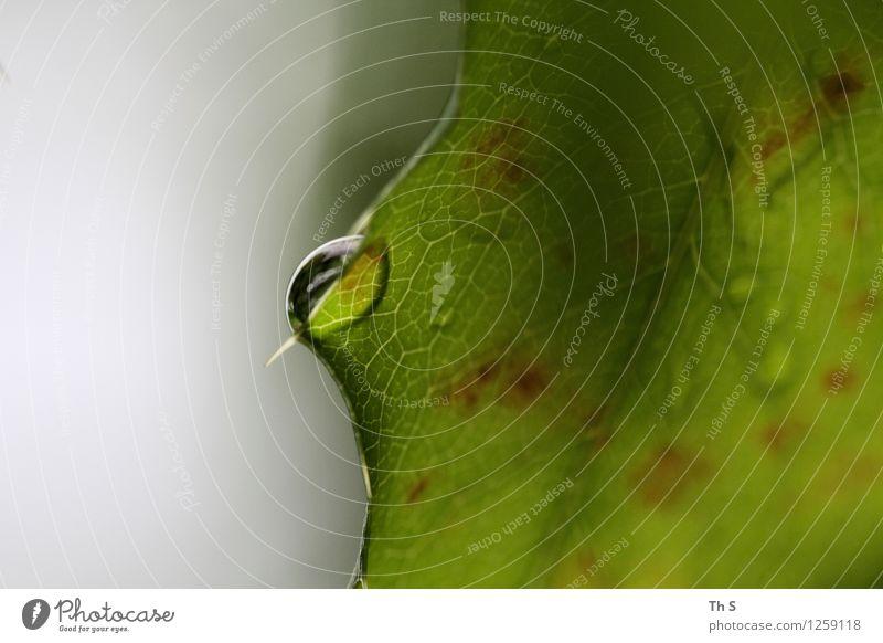 Regen Natur Pflanze schön grün Sommer Blatt ruhig Frühling natürlich grau frisch elegant authentisch ästhetisch Blühend