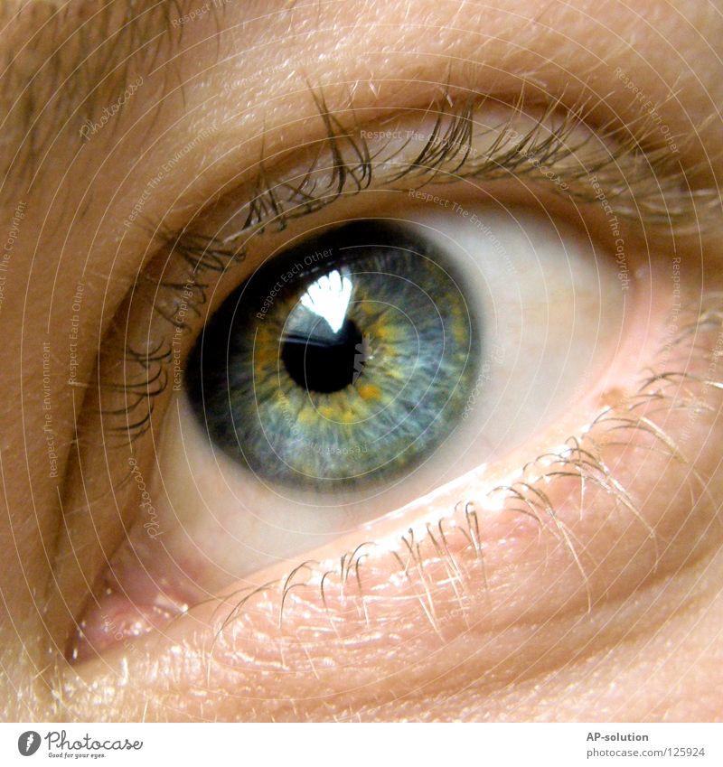 Auge Pupille Blick weiß rund Sinnesorgane Makroaufnahme Augenbraue Wimpern glänzend gelb zart schön Mann Farbenspiel Muster Mensch Konzentration Nahaufnahme