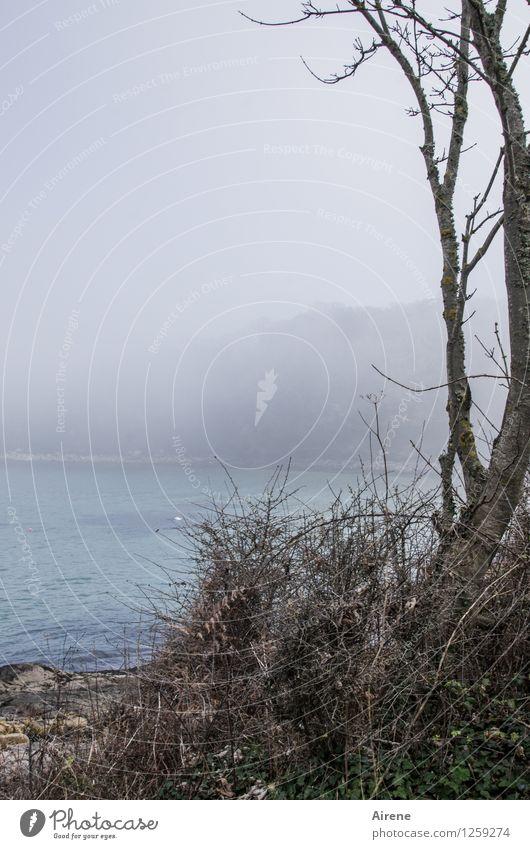 zurückblicken Landschaft Nebel Küste Strand Bucht Meer Ärmelkanal England ästhetisch blau grau türkis Farbfoto Außenaufnahme Textfreiraum links