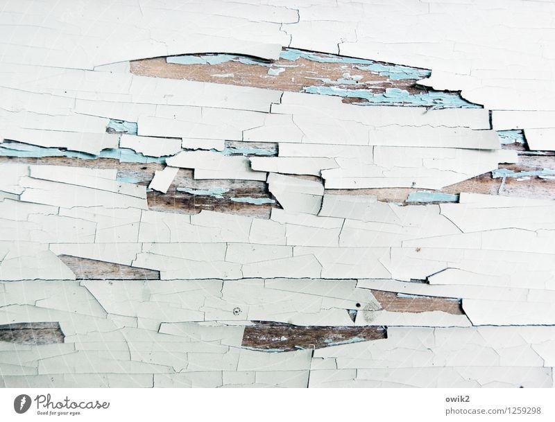 Zeitgeschehen Holz alt dehydrieren Vergänglichkeit Zerstörung Zahn der Zeit abblättern Spuren Farbrest Farbstoff weiß Außenaufnahme Nahaufnahme Detailaufnahme