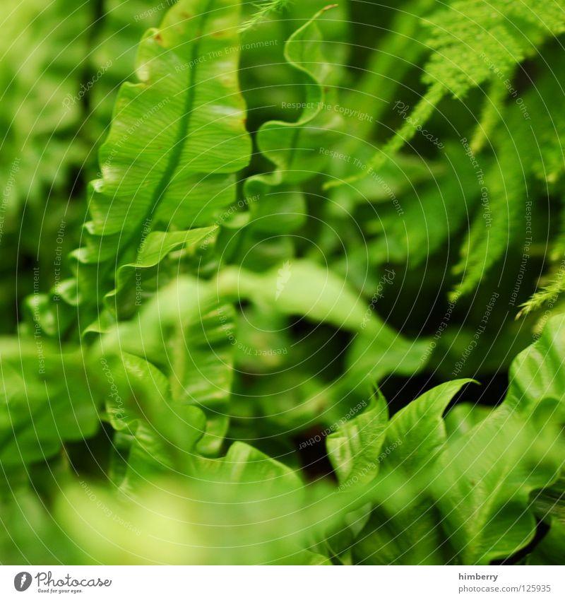 blattwerk Natur Ferien & Urlaub & Reisen grün Farbe Blatt Frühling Linie Park Hintergrundbild frisch Urwald Botanik Gefäße Florida Farbverlauf