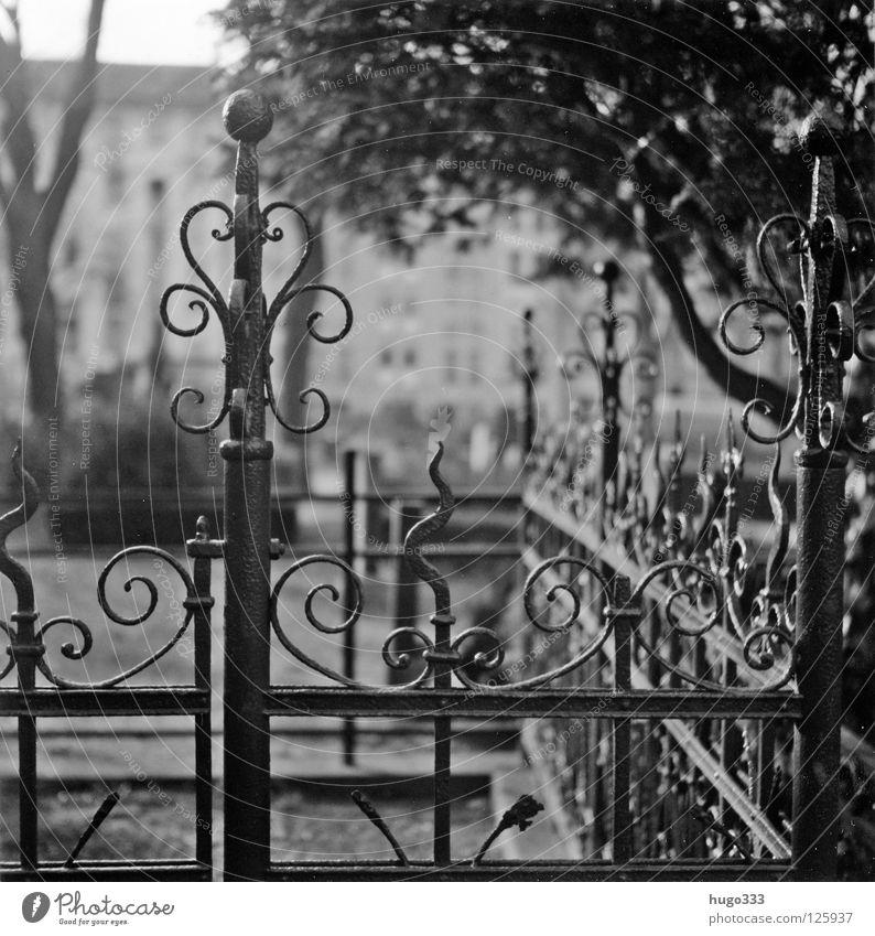 Melancholy graveyard Friedhof Zaun Gußeisen geschmackvoll Ornament Grab Grabmal geschwungen rund Mittelformat Trauer Unschärfe ruhig Gebet kalt Eisen Stahl