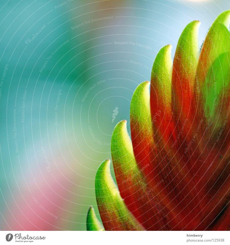 harakiricase Natur Ferien & Urlaub & Reisen grün Farbe Blatt Frühling Linie Park Hintergrundbild frisch Urwald Botanik Gefäße Florida Farbverlauf