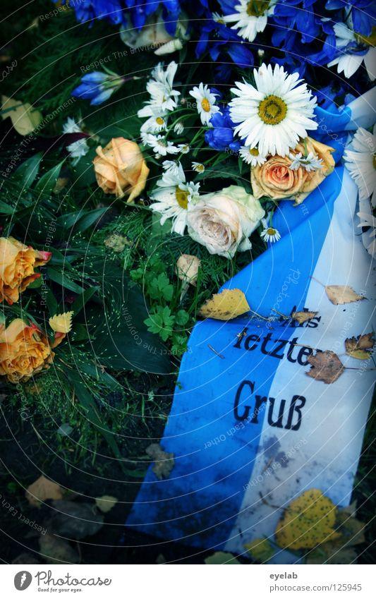 Ein letzter Gruss blau alt weiß Blume Blatt ruhig Tod Leben Herbst Erde Rose Vergänglichkeit Trauer Rasen Ende Verfall
