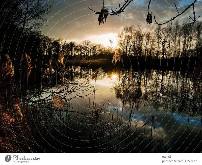 Lichtvoll Umwelt Natur Landschaft Pflanze Luft Wasser Himmel Wolken Herbst Klima Schönes Wetter Baum Sträucher Wildpflanze Zweig Röhricht leuchten