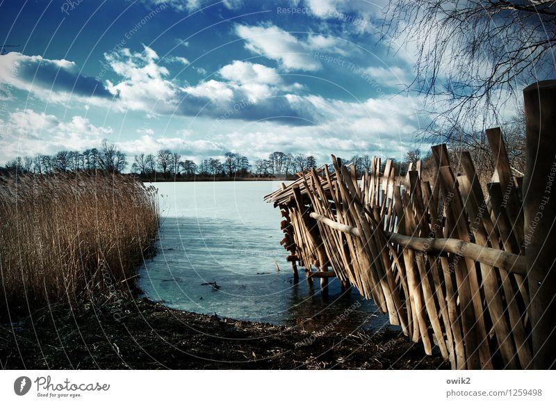 Seeblick Umwelt Natur Landschaft Pflanze Himmel Wolken Horizont Winter Klima Wetter Schönes Wetter Baum Holz hell kalt Idylle Ferne Naturlehrpfad Gerüst