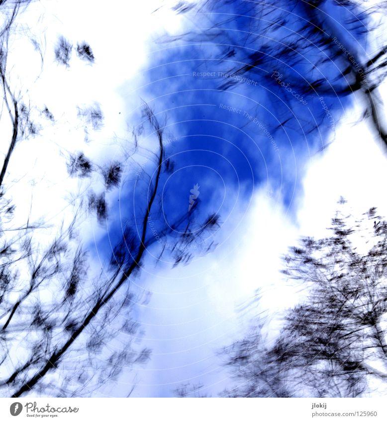 Emma was here... Baum Gegenlicht Langzeitbelichtung Pflanze Wachstum Park verzweigt Licht gemalt Gemälde gezeichnet Winter laublos trist Himmel Kunst