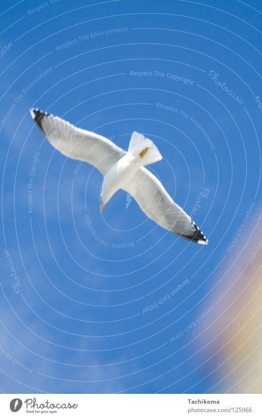 Jonathan Hart Sonne Freude Sommer Meer Ferien & Urlaub & Reisen Freiheit Vogel fliegen Flügel Möwe