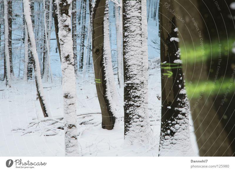 Streifenbäumchen weiß Baum grün Winter schwarz Einsamkeit Wald Schnee Deutschland Schilder & Markierungen Richtung Neonlicht