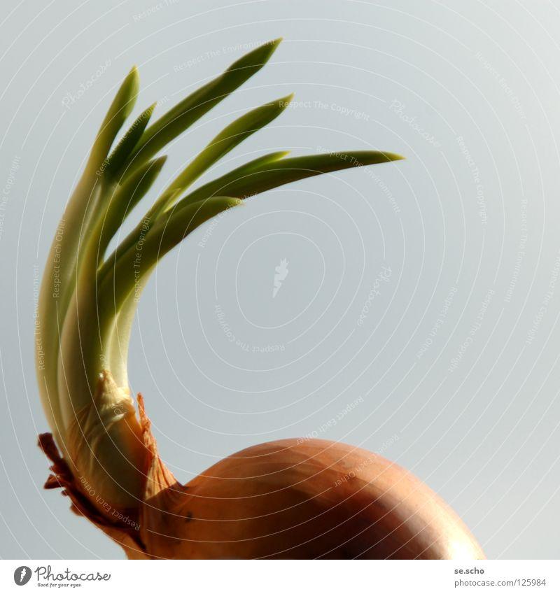 Aufbruch grün Pflanze Ferien & Urlaub & Reisen Frühling Wärme Kraft Zwiebel Gemüse