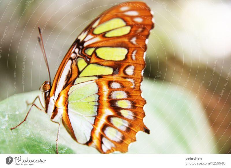 einen moment verharren Natur Pflanze Tier Baum Sträucher Blatt Garten Park Wiese Wildtier Schmetterling Tiergesicht Flügel malachit Fühler Facettenauge Beine 1