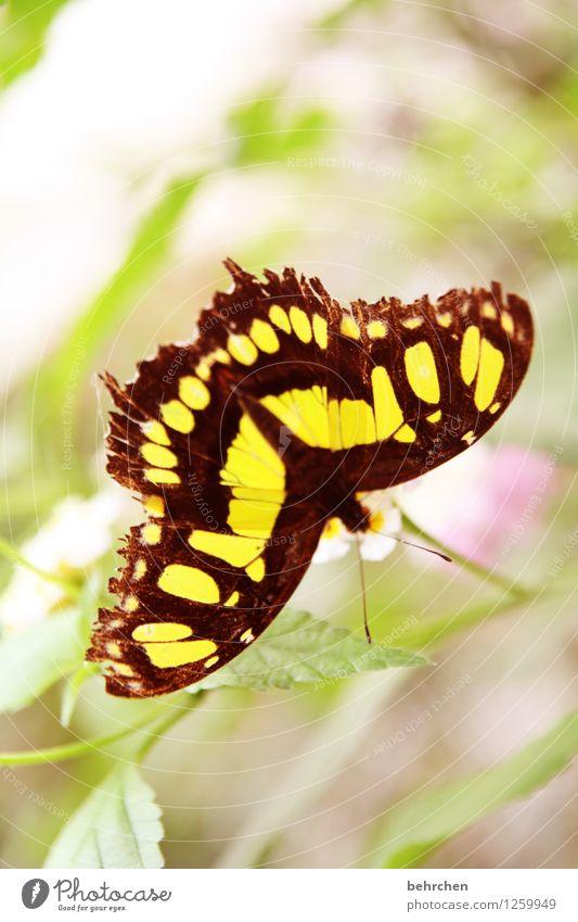 drauf geguckt Natur Pflanze grün schön Sommer Blume Erholung Blatt Tier gelb Blüte Frühling Wiese Garten außergewöhnlich fliegen