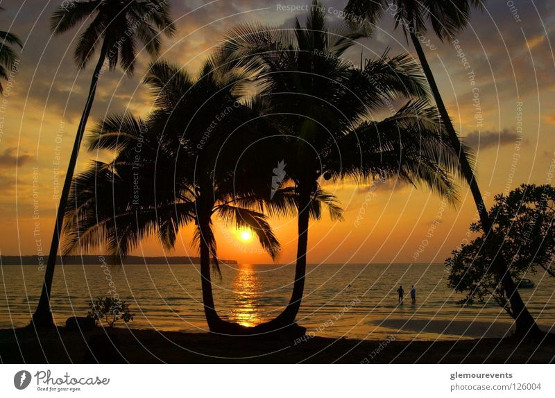 Sonnenuntergang am Strand Meer Liebe Wärme Horizont Insel Romantik Physik Kuba Palme traumhaft Himmelskörper & Weltall Sonnenstudio