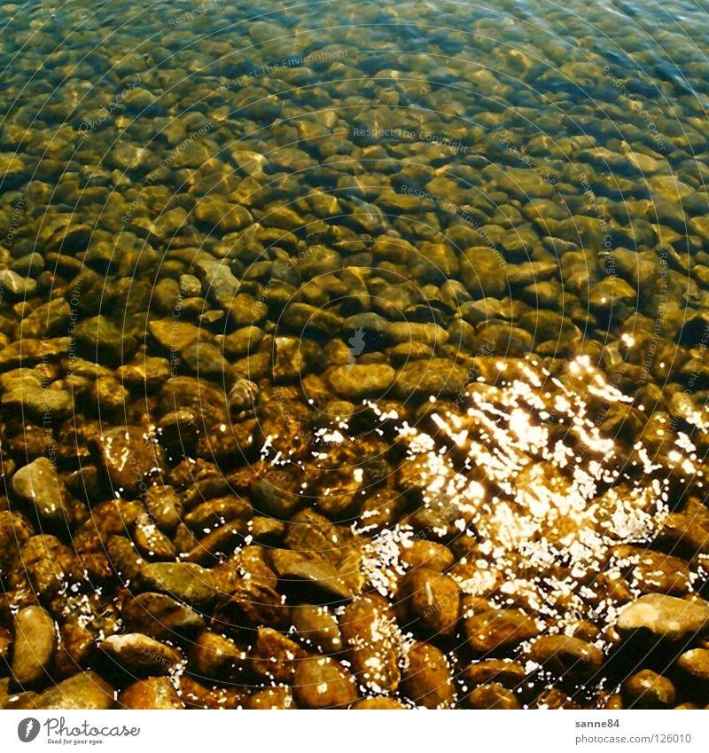 SeebodenBodensee Wasser Sonne Sommer Ferien & Urlaub & Reisen ruhig Erholung Stein Wellen glänzend durchsichtig Seegrund