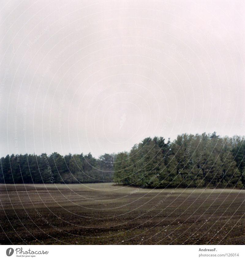 November Natur Wald Herbst grau Sand Regen Feld Erde Landwirtschaft Amerika ländlich Oktober Mittelformat Waldrand pflügen