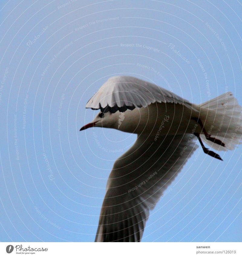 möwenpic Himmel blau schwarz Wolken Einsamkeit Tier Beine Vogel Luftverkehr Feder Flügel Bauch verstecken Möwe Schweben Schnabel