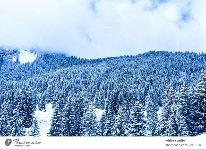 Bitterkalt Wald Schnee Pulverschnee Tourismus Winterliebe Schneelandschaft Wintertag Hügel Natur Nadelwald Weihnachtsbaum Weinachtsbäume Farbfoto