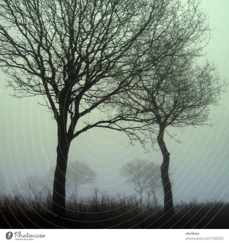 Twins Morgen Kontrast Winter Landschaft Himmel Wetter Nebel Baum Gras Feld Autofahren Zusammensein Umarmen groß klein stark schwarz Schutz Schwäche Zwilling