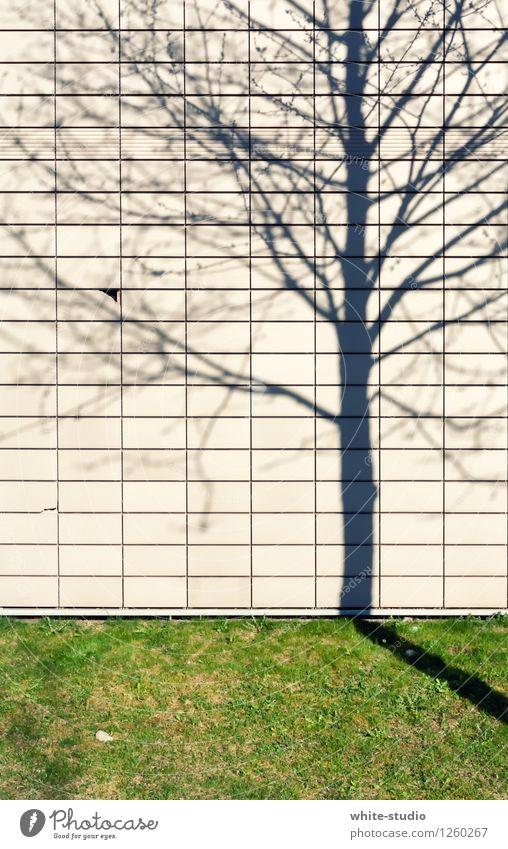 Schattenspiel Natur Überraschung Schattenseite Schattendasein Schattenkind Abbild Komplize Baum Ast Farbfoto Außenaufnahme Menschenleer Tag Totale