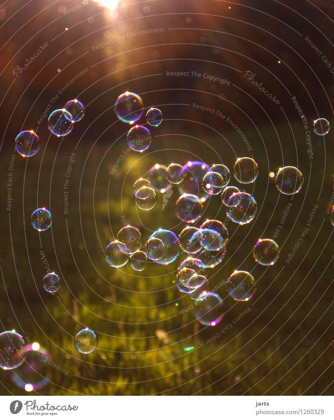 blabber bulb Freude Wiese Spielen fliegen frisch elegant frei Schönes Wetter Leichtigkeit Schweben Blase Seifenblase regenbogenfarben