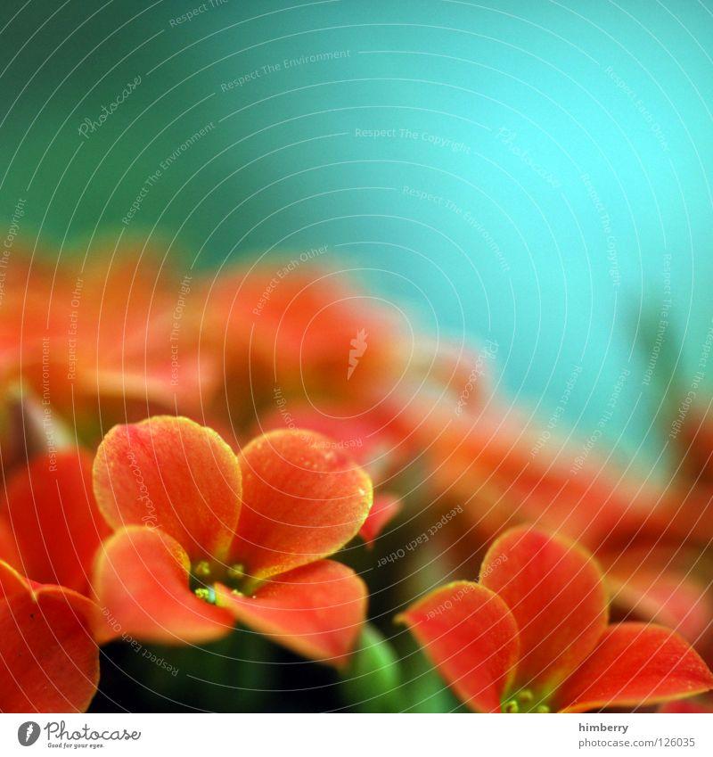 return fire Natur Pflanze schön Farbe weiß Sommer Blume gelb Frühling Blüte Hintergrundbild Feste & Feiern Wachstum frisch Blütenknospen Botanik