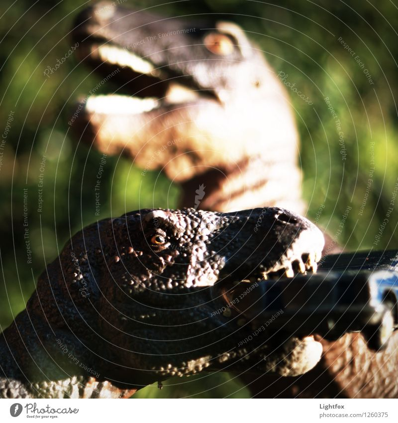 Jurassic Park :-) Tier Tiergruppe füttern rebellisch Tierliebe Dinosaurier Tyrannosaurus Urzeit vernichten ausgestorben kämpfen Fressen Angriff angriffslustig