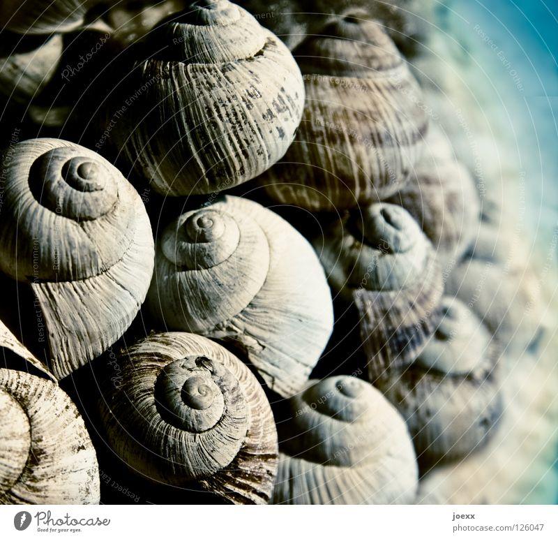 Gruppenkuscheln Wasser Meer Sommer Freude Strand Ferien & Urlaub & Reisen Erholung Stein See Sand Küste Dekoration & Verzierung eng drehen Sammlung Muschel