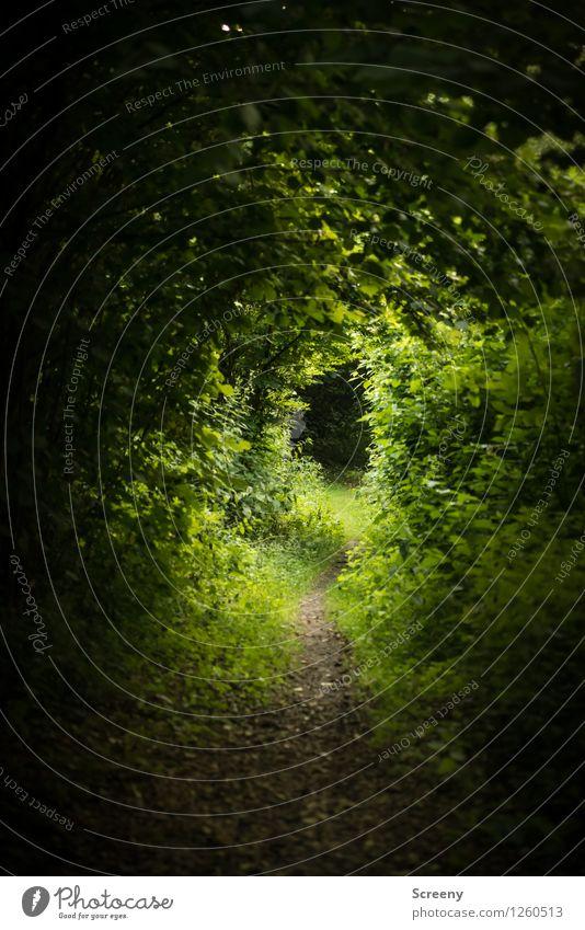 Der Pfad wandern Natur Landschaft Pflanze Sommer Baum Gras Sträucher Wald grün ruhig entdecken Idylle Wege & Pfade Verhext Farbfoto Außenaufnahme Menschenleer