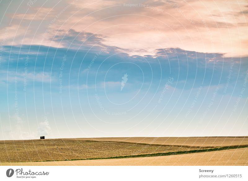 Vielschichtig Natur Landschaft Himmel Wolken Sommer Wetter Feld ruhig Farbe Wege & Pfade Landwirtschaft Farbfoto Außenaufnahme Menschenleer Dämmerung