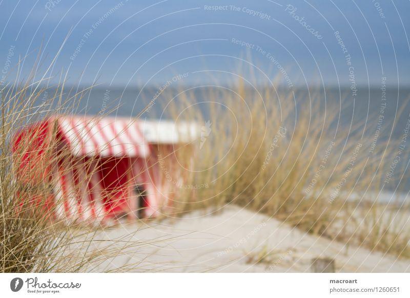 Urlaub Ferien & Urlaub & Reisen grün Sommer Wasser weiß Meer rot Strand Gras See Sand Ostsee Schilfrohr Stranddüne Sandstrand gestreift