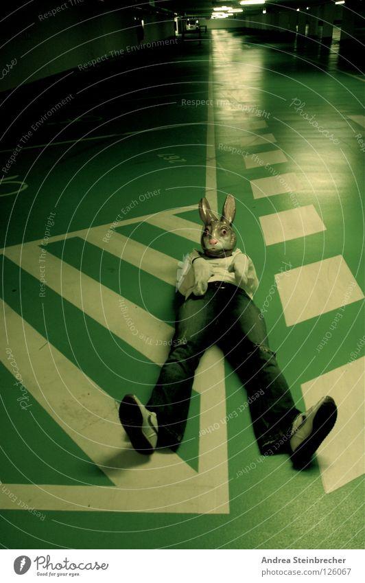 Hase auf der Fahrbahn grün ruhig Streifen obskur Verkehrswege Hase & Kaninchen Parkhaus