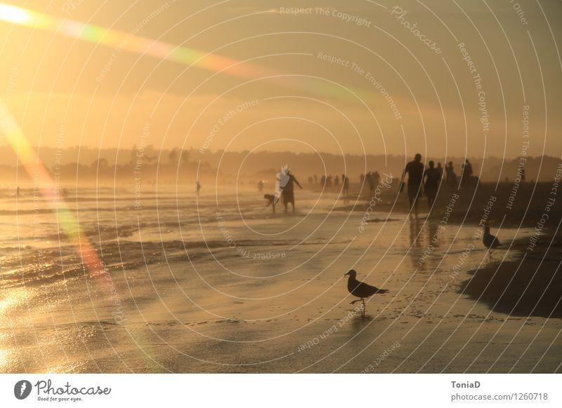 Coronado Beach Glück Wellness harmonisch Sinnesorgane Erholung ruhig Meditation Schwimmen & Baden Ferien & Urlaub & Reisen Ferne Freiheit Sommer Sommerurlaub