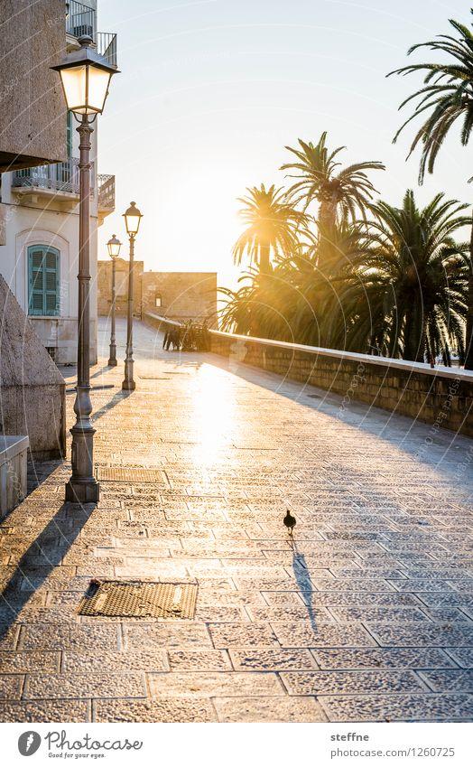 Bari Sonnenaufgang Sonnenuntergang Sonnenlicht Sommer Schönes Wetter Kleinstadt Ferien & Urlaub & Reisen Italien Apulien bari Laterne Gegenlicht Palme ruhig