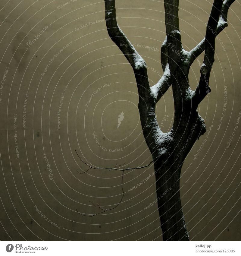 halt deine liebe fest Baum Herbst Wand Mauer Winter kalt Hinterhof Park Friedhof Trauer Wachstum Reifezeit trist dunkel Zweige u. Äste Holz Brennholz Ranke