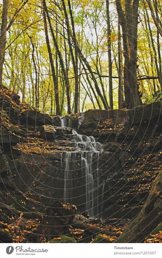 Ein angenehmer Ort. Umwelt Natur Pflanze Wasser Herbst Schönes Wetter Wald Schlucht Margarethenschlucht Wasserfall Stein Holz ästhetisch natürlich braun grün