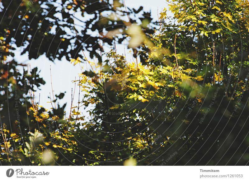 Stielleben. Natur Pflanze Himmel Schönes Wetter Wald blau grün schwarz Blatt Stengel laublos Unschärfe Herbst Trieb Farbfoto Außenaufnahme Menschenleer Tag