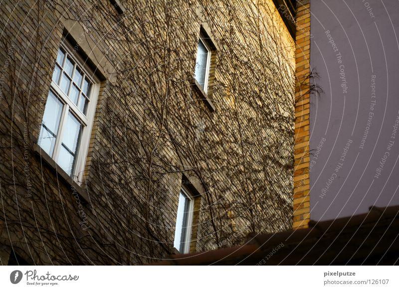 feindliche übernahme Pflanze Haus Wand Fenster Gebäude Fassade Klettern Häusliches Leben fangen Verbindung Sportveranstaltung Hinterhof Vernetzung Konkurrenz