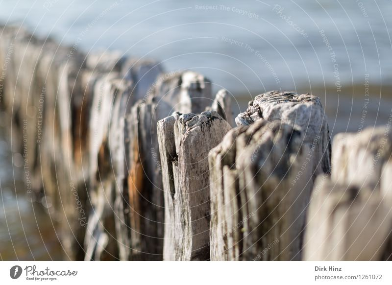 Buhne am Laboeer Strand II Natur alt blau Wasser Meer Landschaft Umwelt Küste Mauer Holz braun Wellen planen Sicherheit historisch