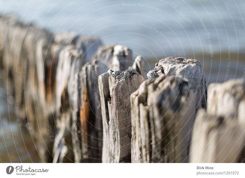 Buhne am Laboeer Strand II Wissenschaften Umwelt Natur Landschaft Wasser Wellen Küste Nordsee Ostsee Meer Holz alt fest historisch maritim blau braun planen