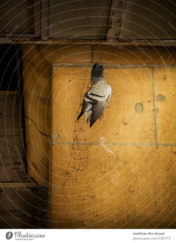 ZERSTÖRUNG Tier Vogel Lebewesen Taube bewegungslos hängen erhängen Todesarten Trauer elend Qual hässlich töten Urbanisierung Zerstörung unfreundlich Wand Säule