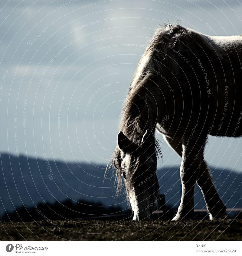 in the shadow Himmel blau Baum Wolken Tier dunkel Gras Haare & Frisuren Beine Horizont Rücken Ernährung Hügel Pferd Ohr Weide