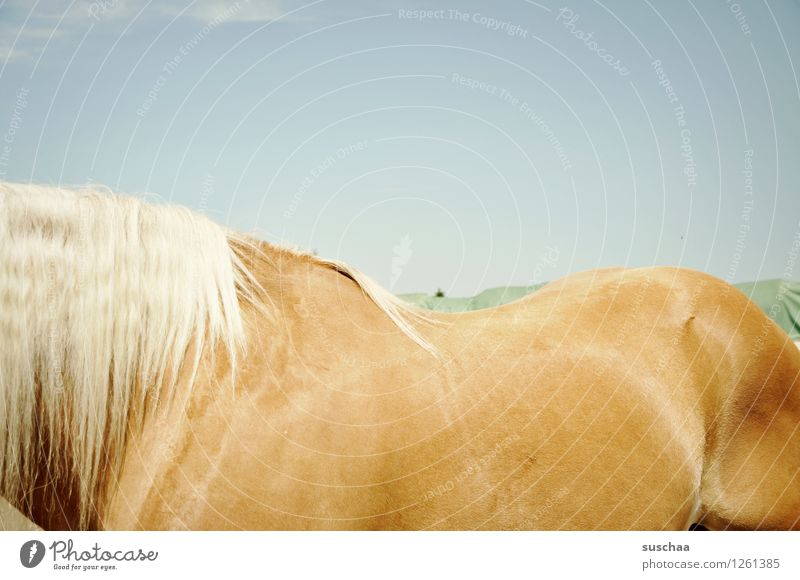 pferderücken Himmel Pferd Außenaufnahme Sommer Reiten ponyhof Bauernhof Ponys Pferderücken Mähne