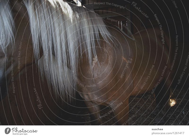 pferd im stall Pferd Ponys Pferdestall Mähne Bauernhof ponyhof Haare & Frisuren