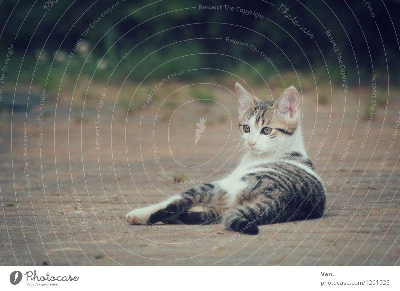 Samson Pflanze Haustier Katze Fell 1 Tier Stein beobachten klein Neugier Katzenbaby Farbfoto Gedeckte Farben Außenaufnahme Menschenleer Abend